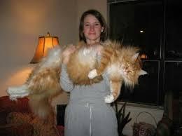 Chubby Girl Running Meme - coolest chubby girl running meme top 15 amazingly fat cats