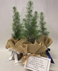 burlap tree kit