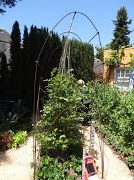 vegetable garden tended
