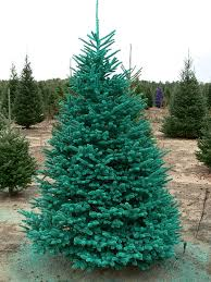wolosek christmas trees home facebook