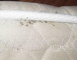 Bed Bugs On Mattress Bed Bug Control Yucaipa U2013 Pest Control And Exterminators Of Yucaipa