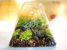 Moss Vase Filler Modern Pyramid Lichen Moss Terrarium 39 00 Via Etsy