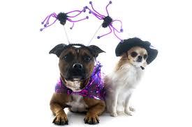 Spider Dog Halloween Costume Halloween Costumes Ideas Creative Halloween Costumes Ideas