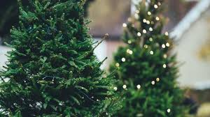 trees harder to find more expensive this year due to