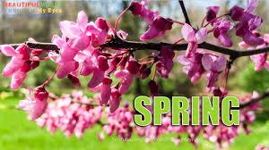 beautiful spring season day morning peaceful u0026 relaxing usa