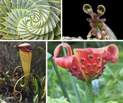 Tropical Flowers And Plants - 70 extremely exotic plants flowers forests u0026 trees webecoist