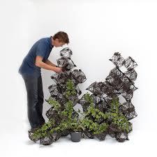 houseplant trellis geometric tumbleweed trellis lets indoor plants climb up the walls
