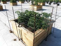 how to support tomatoes bonnie plants
