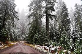 Natural Christmas Tree For Sale - christmas tree permits on sale for umpqua national forest