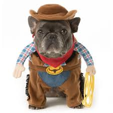 Halloween Costume Cowboy Halloween Dog Costume Ideas 32 Easy Cute Costumes