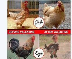 Memes For Lovers - funny memes and tweets from the trending topic valentine s is