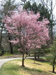 event details page small trees for your yard new