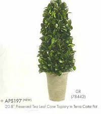 Real Topiary Trees For Sale - real topiary trees tall ball pom pon cone u0026 spiral