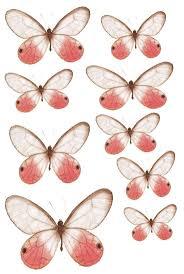 54 best skull images on pinterest butterflies printable