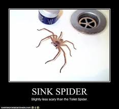 Friendly Spider Memes Image Memes - spiderhugger backyard arachnology