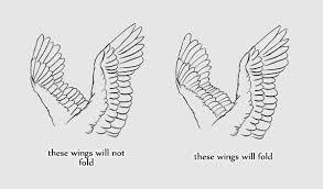 flight beginner u0027s guide drawing wings