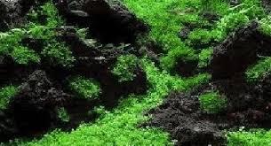 lava rock aquariums grills landscape