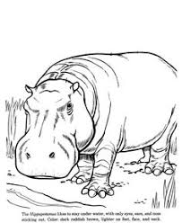 animal coloring pages for children happy little zebra animal coloring page zebra coloring page