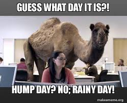 Funny 40th Birthday Memes - guess what day it is hump day no rainy day hump day camel