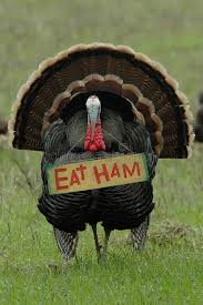thanksgiving humor eat ham turkey stock photography image 577802