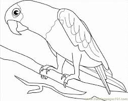 coloring pages parrot luau parrots free printable pictures 703496