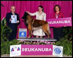 belgian shepherd world championship best in show daily