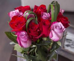 Flower Com Dvflora Com Welcome To The New U0026 Improved Dvflora Com