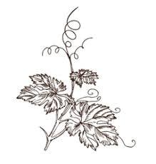 grape vine sketch frame round royalty free vector image