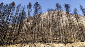 Graham Wa Wildfire by How Journalists Fan The Flames Of Wildfire In The West Montana