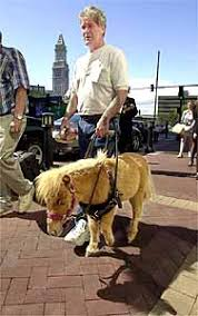 Dogs Helping Blind People Guide Horse Foundation Miniature Horses For The Blind