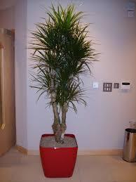 Office Plants Office Plants Plant Displays U0026 Interior Landscaping Gloucester