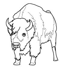 bison colouring pages for kids