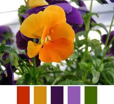 9 best red orange purple color scheme images on pinterest