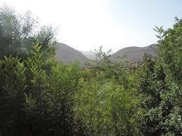 par vue de jardin vue de la vallée cachée par les arbres du jardin picture of