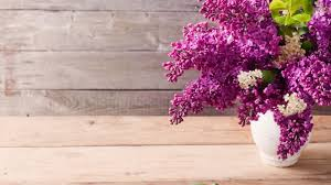 interesting lilac hdq images collection high quality wallpapers