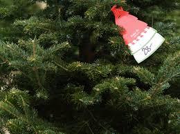 4 popular christmas tree types u0026 how to decorate them