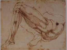 anatomy u2013 michelangelo drawing blood