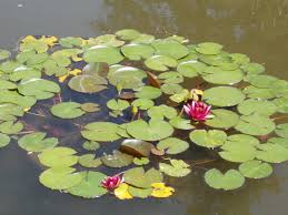file japanese garden flowers margaret island budapest