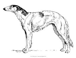 interesting ideas greyhound animal coloring pages pictures