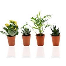 plante d駱olluante bureau mini plante publicitaire dépolluante plante publicitaire pot terre