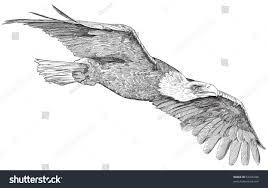 soaring eagle sketch bitmap copy my stock illustration 93326998