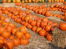 fall pumpkins wallpaper 442211 color wallpapers page 2 yosemite sun superb forest