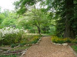 native plants virginia potomac overlook park arlingtonmasternaturalists