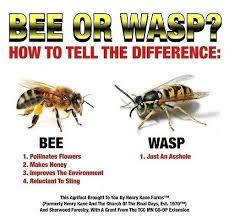 Funny Asshole Memes - asshole wasp