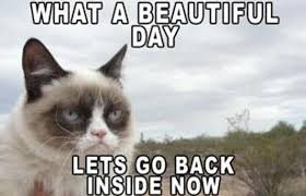 Unhappy Cat Meme - grumpy cat meme what a beautiful day lets go back inside now