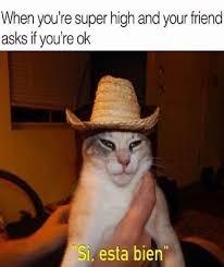 Weed Meme - weed memes marijuana memes