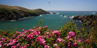 enjoy gardens and bird watching at mendocino coast botanical gardens
