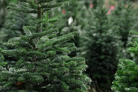 richristmastree colinjmccabe wp content upload