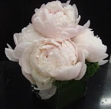 Vase To Vase Florist 251 Best Flowers In Cube Vases Images On Pinterest In New York