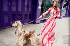 afghan hound mandarin our work petlondon models